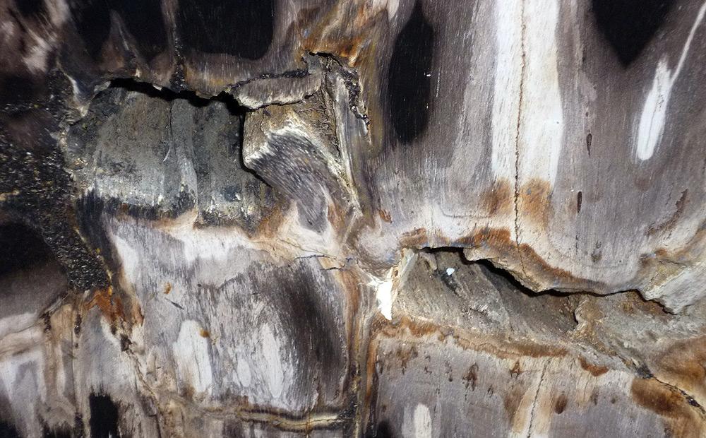 Couchtisch Versteinertes Holz ~ Versteinertes Holz  Gangl Interieur  Gangl Interieur